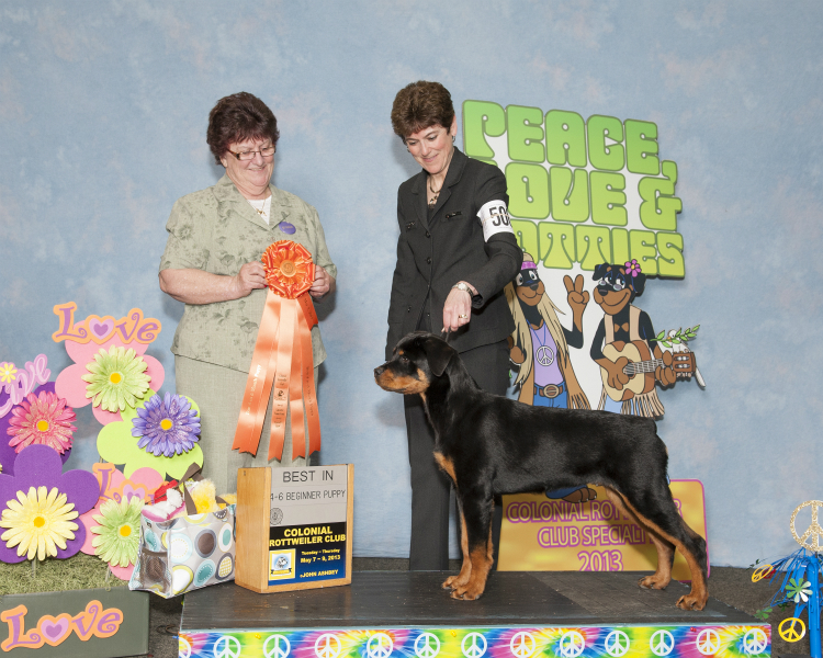 2013 Best in Beginner Puppy