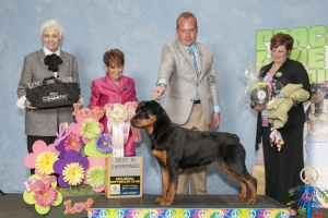 2013 Best in Puppy Sweeps